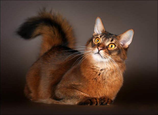 Как правильно поглаживать кошку, чтобы защитить себя от недоброго