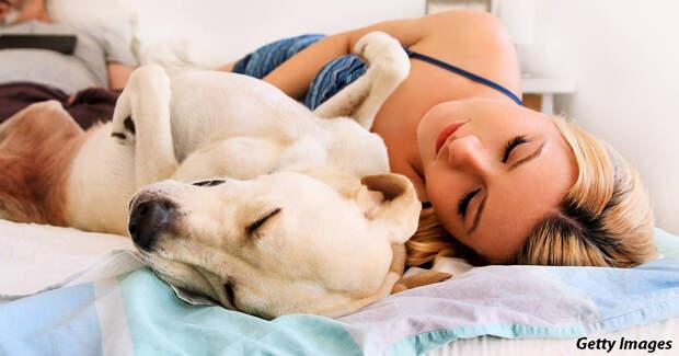 Психолог выяснил, что на самом деле видят собаки во снах