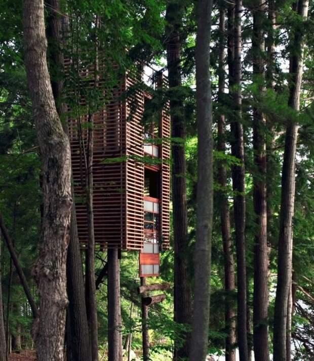 Домик на дереве «4TreeHouse» спроектировал канадский архитектор Lukasz Kos.   Фото: matadornetwork.com.
