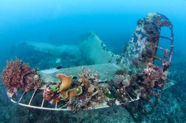 Еще один затопленный во время Второй мировой истребитель. /Фото: fotorelax.ru