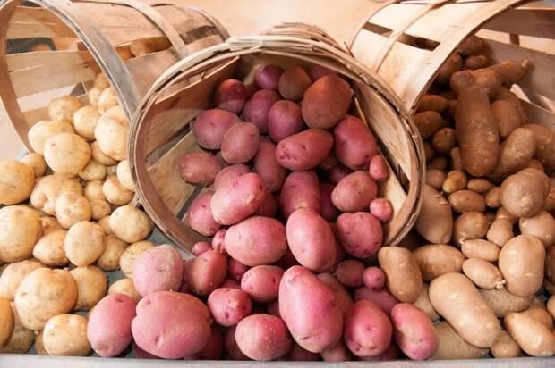 Маленькая хитрость, благодаря которой картофель долго хранится и не прорастает