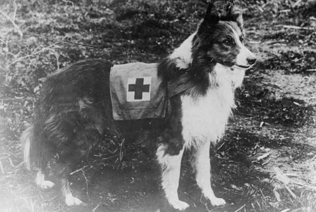 Дик - собака-миноискатель