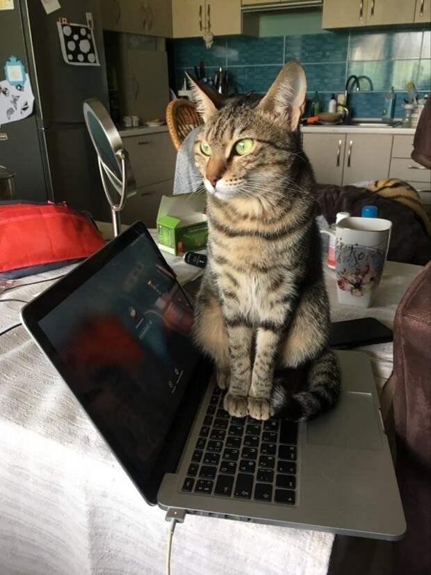 Игры с кошками. Самые популярные вопросы зоопсихологу