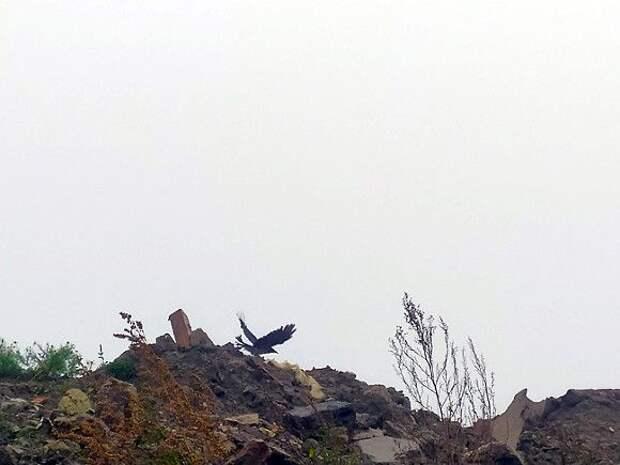 В Ломоносовском районе Ленобласти нашли свалку с коровьими головами