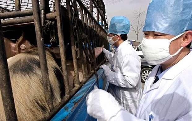 Первую в 21 веке пандемию собъявил из-за свиного гриппа Фото: EAST NEWS