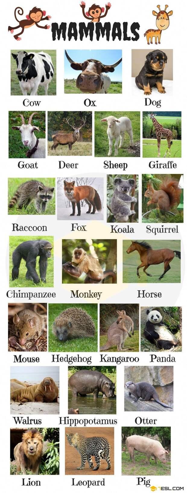 Интересные факты о животных, ч.1