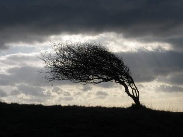 Спаслись чудом: наУкраине дерево рухнуло настолик кафе, из-за которого только встала семья сребёнком (ФОТО, ВИДЕО)