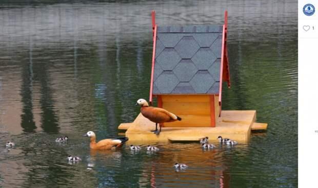 Домик для уток появится на Марьинском пруду