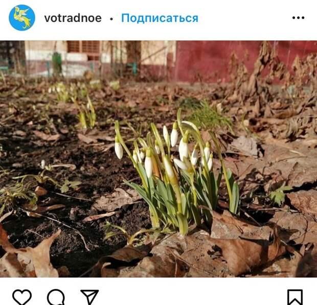 Фото дня: на Римского-Корсакова распустились подснежники