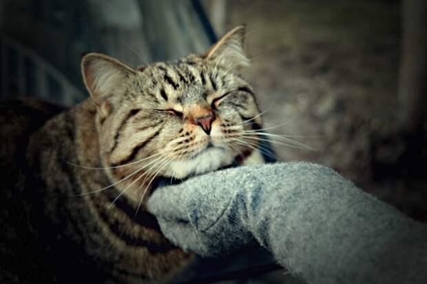 Минутка доброты