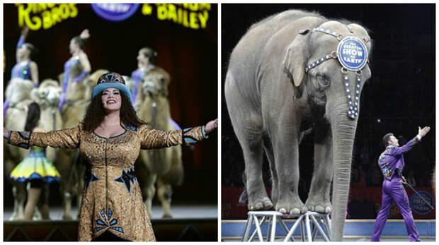 Славу цирку принесли дрессированные слоны  закрытие, сша, цирк