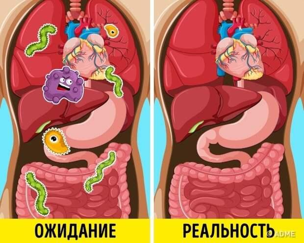 Токсины, шлаки и еще 4 «загрязнителя» организма, которых на самом деле нет