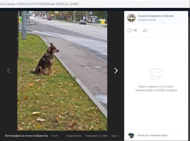 Фото дня: пёс Рэкс свободно гуляет по улице Свободы