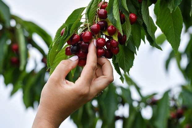 Минприроды опровергло сообщения об ужесточении правил сбора грибов и ягод