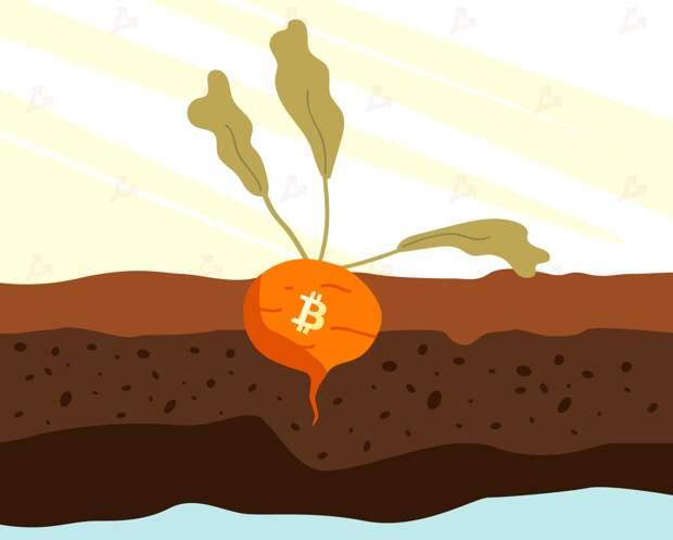 Пять майнинговых пулов сигнализировали о поддержке обновления Taproot в сети биткоина