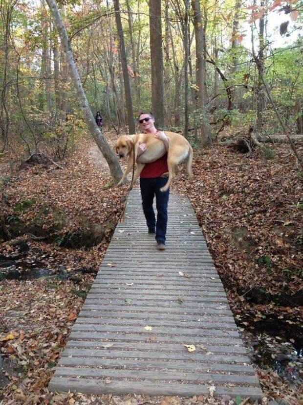 15 собак, которые боятся самых забавных вещей
