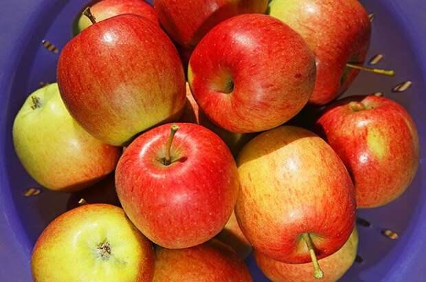 Крупные, сладкие, урожайные. 5 лучших яблонь