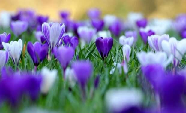 А на носу весна!