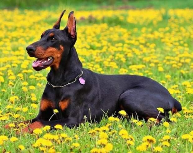 Топ-25: Важные вещи, которые нужно знать, прежде чем брать из приюта собаку
