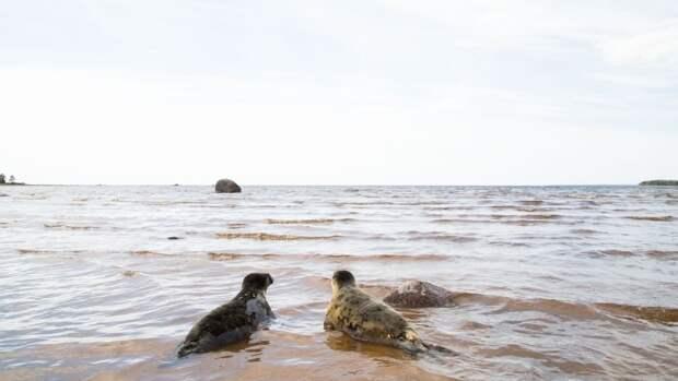Причиной гибели редких нерп на побережье Каспийского моря стало браконьерство