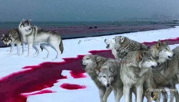 Нашествие волков