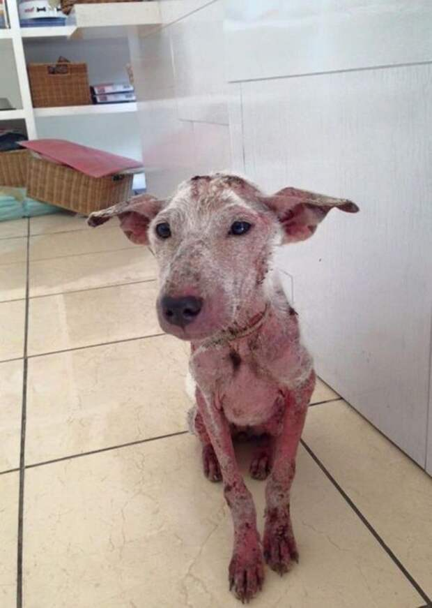 Умирающий пес запрыгнул к незнакомцам в автомобиль.