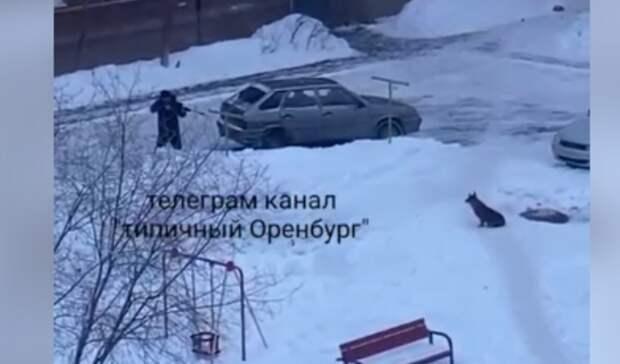 Житель Оренбурга стрелял по уличной собаке из винтовки