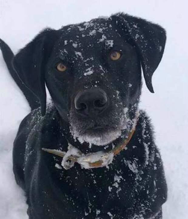 Скромняга пес не растерялся, когда к дому подбежали воры история, история спасения, помощь животным, собака, собаки, спасение животных