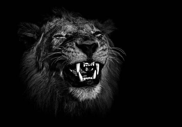 zhivotnye 7 Черно белые портреты диких животных