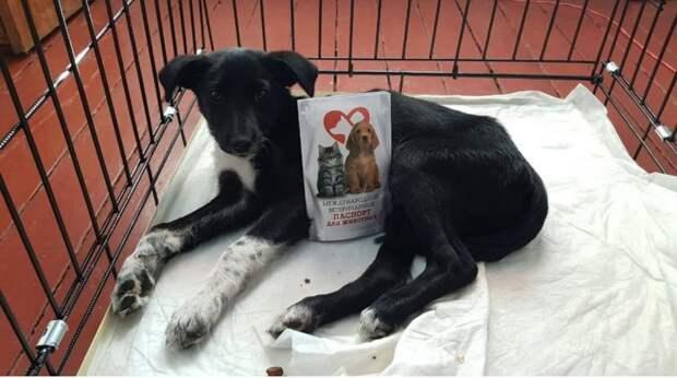 Больной щенок лежал за гаражами, свернувшись клубочком. Он нуждался в помощи