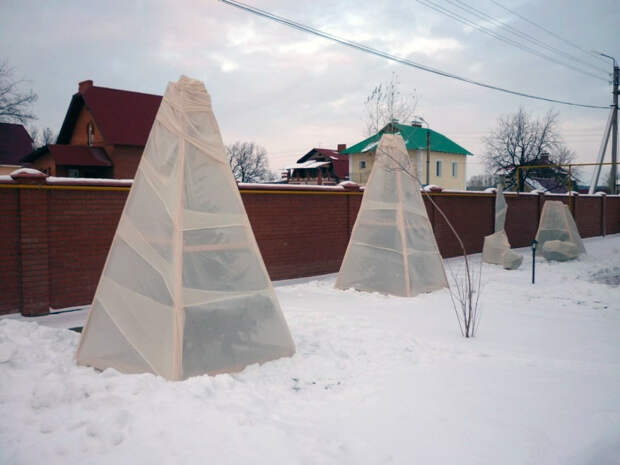 Три простых способа утеплить сад на зиму
