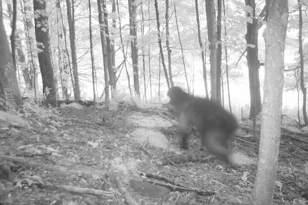 9 фото из леса, которые ученые не смогли объяснить