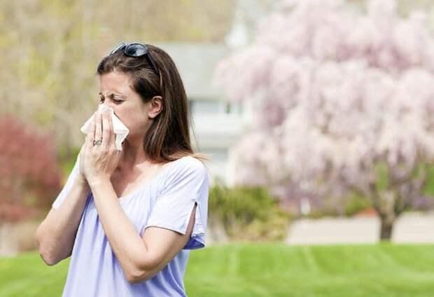 Антигистаминные препараты при сезонной аллергии блокируют благотворное воздействие физических упражнений