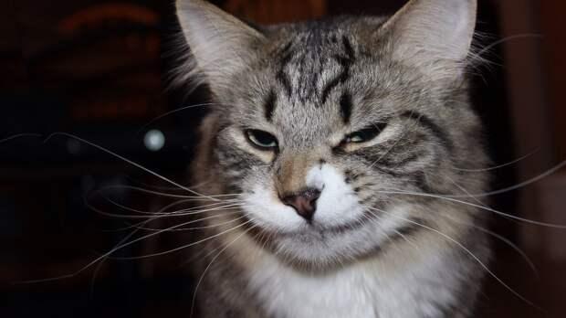 Самые здоровые породы кошек назвали эксперты