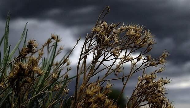 «Желтый» уровень опасности из‑за ветра и грозы продлили в Московском регионе на 26 мая