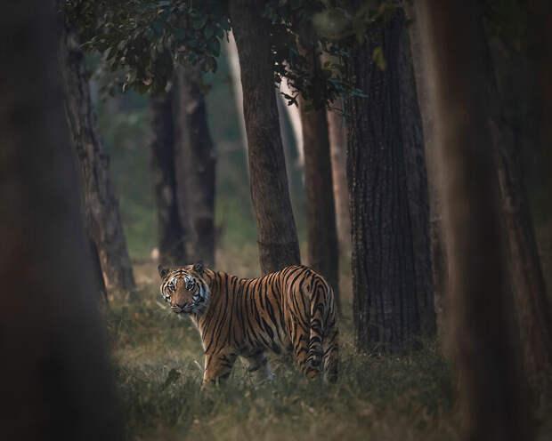 Лучшие снимки дикой природы #Nature2020 от Agora