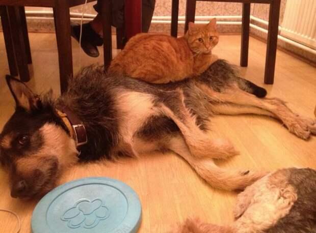 Но зачем истязать животное, рожденное доминировать, а не подчиняться? /Фото: pikabu.ru.