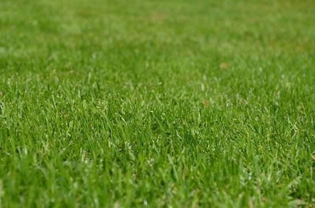 Травы, Газон, Сад, Декоративные Травы, Зелень, Луг