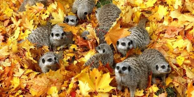 huffingtonpost Обитатели осеннего леса.