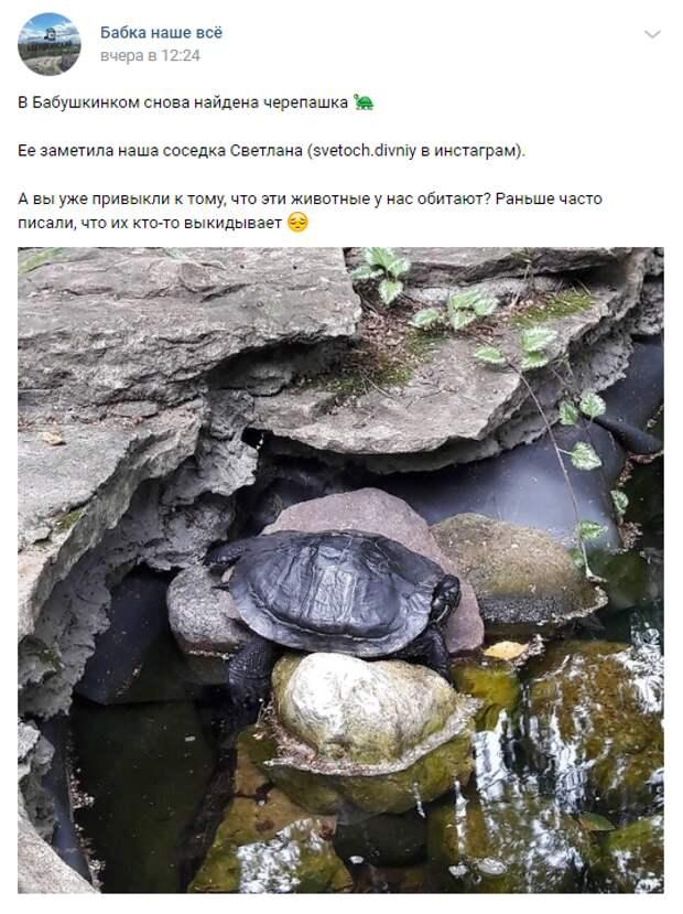 На Яузе снова заметили черепаху