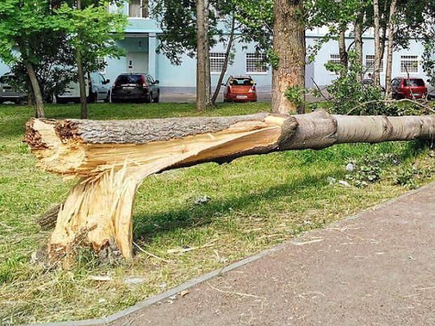 В Москве из-за шквального ветра рухнули два дерева, повреждены две машины
