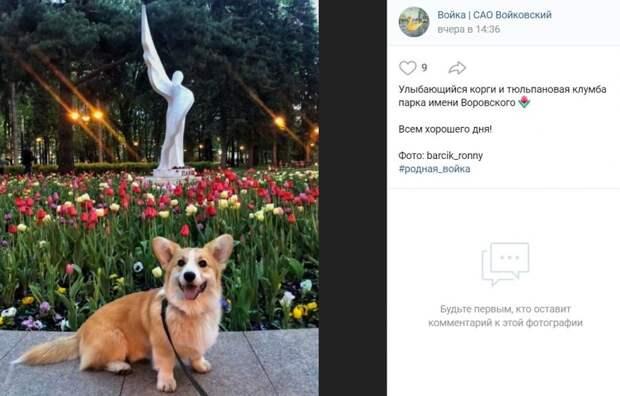 Фото дня: счастливый корги в парке имени Воровского