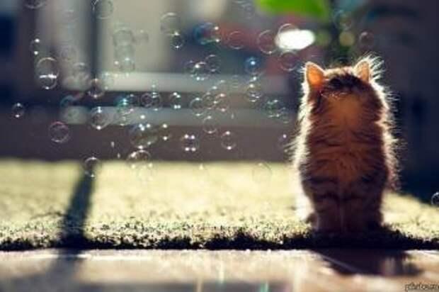 Сон,про серого кота.)