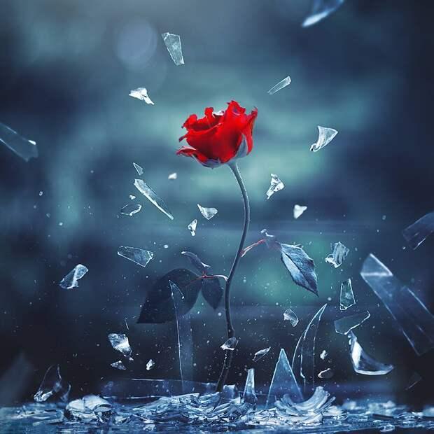 ФОТОВЫСТАВКА. Цветы в фотографиях Ashraful Arefin