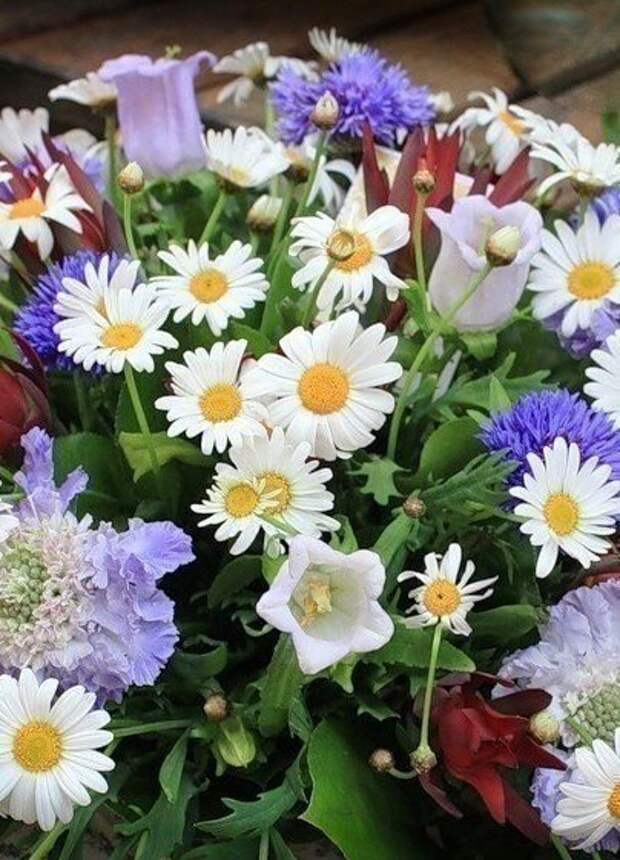 Лето. Утро. Цветы