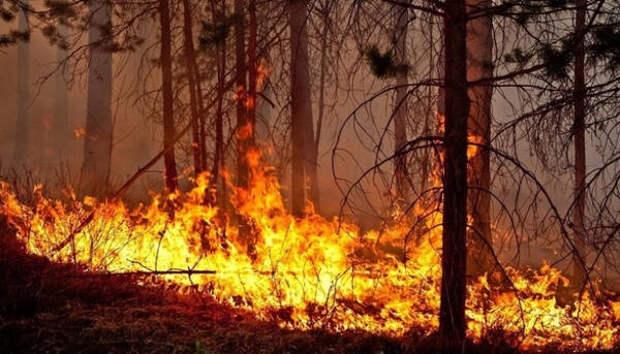 В Карелии произошел первый в этом году лесной пожар