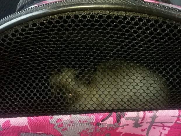 Он шипел, рычал и царапался! Дикий деревенский котёнок не хотел в семью… но пришлось! :)