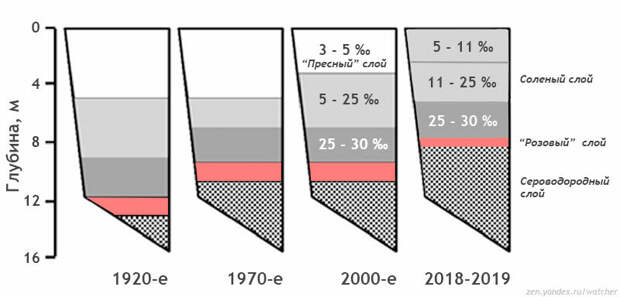 """Результаты исследований экспедиции 2019-2019 гг. в сравнении с данными предыдущих измерений. Поверхностный слой уже не пресный, стал тоньше - всего 2 метра. """"Розовый"""" слой уменьшился и стал выше. Сероводородный слой занимает половину озера. Рисунок автора на основе измерений из доклада """"Морское озеро Могильное: сто лет одиночества"""" (2014) и экспедиции РГО."""