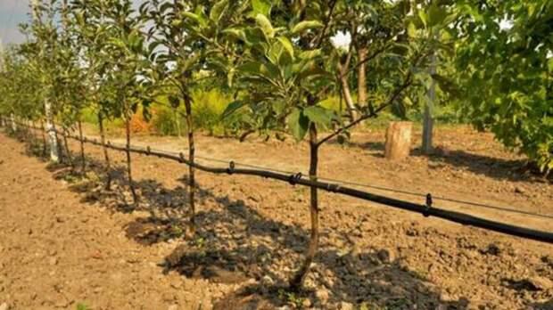 Эксперт изСтаврополья объяснил преимущества садов перед кукурузой