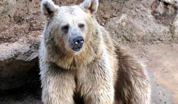Принца Лихтенштейна заподозрили вубийстве крупнейшего медведя вЕвропе